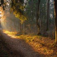 Утро в лесу :: Виктор К