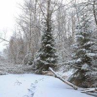 следы на снегу :: Светлана