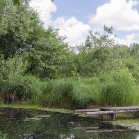 Мостик на пруду. :: Alexandr Gunin