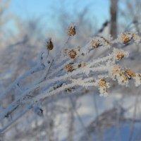 Мороз,трещит. :: Андрей Хлопонин