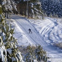 Лыжник :: Татьяна Н.