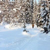 Лыжи зовут!!! :: Радмир Арсеньев