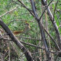 Птицы в дикой природе :: alers faza 53