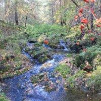 Лесной ручей :: Александр Moryak 34