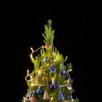 Живая елка после рождества :: Nara Nakhshkarian