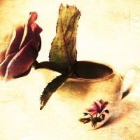 Роза в стиле Винтаж :: Victoria