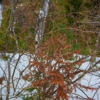 Зимние цветы :: юрий Амосов