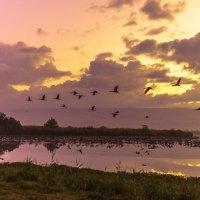 Перед рассветом на озере Хула :: Адик Гольдфарб