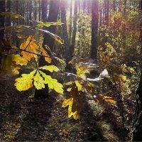 Осенний свет :: Геннадий Худолеев