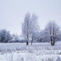 Зимняя картинка :: Маргарита Батырева