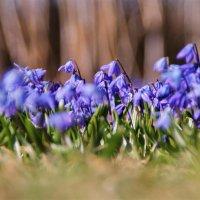 Весна в моем саду :: Татьянка *