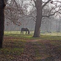 Пейзаж января..! :: barsuk lesnoi