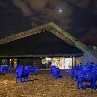 Синие овечки :: Анатолий Степанько