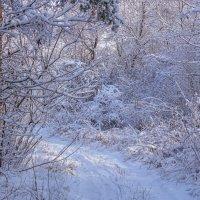 Зимний лес :: Игорь Сикорский