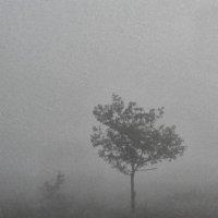 Туман. :: Николай Сидаш