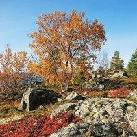 Осень на островах :: Сергей Курников
