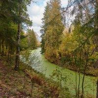 Осенний лес. :: Евгений Королёв