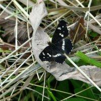 Бабочка :: Наталья Цыганова