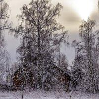 январское солнце :: Петр Беляков