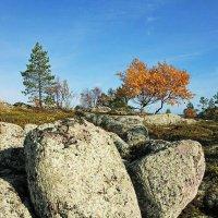 Осень в саду камней :: Сергей Курников
