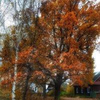 Осенняя зарисовка :: Анастасия Самигуллина
