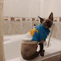 Похождения котенка Таноса :: Елена Павлова (Смолова)
