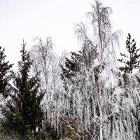 Зимний лес :: Cissa Andebo