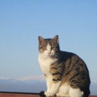 Кошка из города Сиде,турция. :: Зинаида
