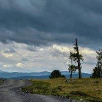 Семинский перевал, дорога к панораме :: Виктор Штабкин