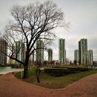 ЗИМА 2020 г. :: Виктор Никитенко