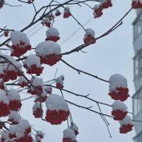 После снегопада. Январское утро. :: Михаил Полыгалов