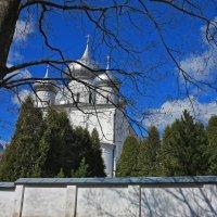 В. Новгород. Хутынский монастырь :: Наталья