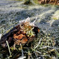 Туман, мороз и солнце .... :: Heinz Thorns