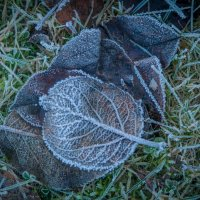 Почти зима :: Евгения Кирильченко