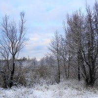 Зимние картинки :: Маргарита Батырева