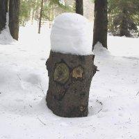 В этом лесу нам, кажется, не рады :: Елена Якушина