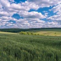 В начале лета :: Евгений Кирюхин