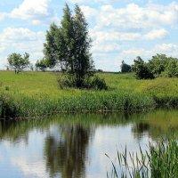 Летним днём у пруда. :: оля san-alondra
