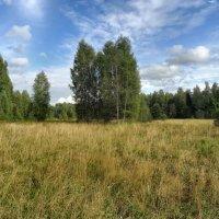 Лесные просторы :: Денис Бочкарёв