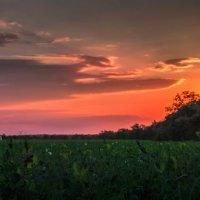 Вечернее поле гороха :: Евгений Кирюхин