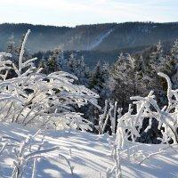 Морозное утро в горах :: tamara *****