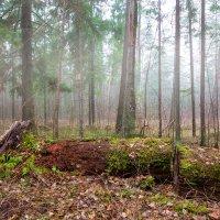 В лесу :: Александр Синдерёв