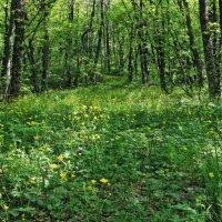Весной.... :: Варвара