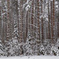 В снежном наряде :: Леонид Никитин