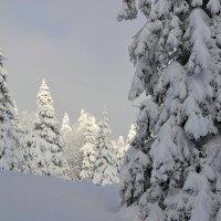 Зимняя  сказка :: tamara *****
