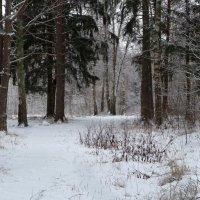 Немного зимы в конце января :: Марина