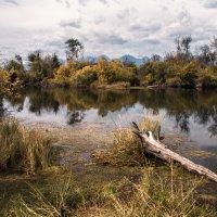 Заболоченное озеро :: Николай