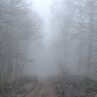 в тумане :: igor G.