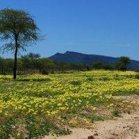 Пустыня после тропического ливня :: Зуев Геннадий