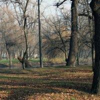 Зимним днём. :: barsuk lesnoi